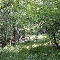 прогулка по лесу 5 :: Евгений Вяткин