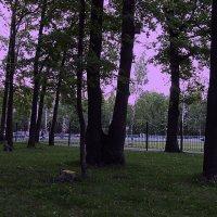 парк :: Юлия Денискина