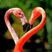 Сердце фламинго. :: Alexander Andronik