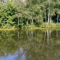 лесной водоём. :: Пётр Беркун