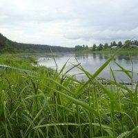 высокая трава от частых дождей  на берегу Сухоны в этом году :: Р о м a н