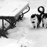 Кремлевские коты :: Надежда Водорезова