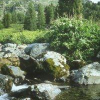Алтайская речка :: Марина Домосилецкая