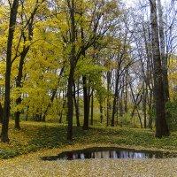 Осенний блюз. :: Инна Щелокова