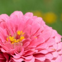 Лето в цветах :: snd63 Сергей