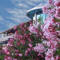 Бурное цветение... :: СветЛана D