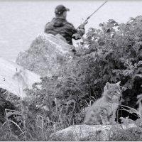 грозный котяра-рыболов :: sv.kaschuk