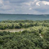 Лес и река :: Игорь Сикорский