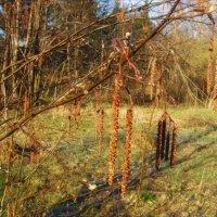 Весенний лес :: Анна Воробьева