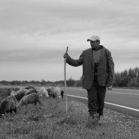 Пастух :: Павел Кореньков