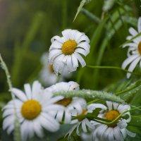 В капельках дождя :: Boris Khershberg
