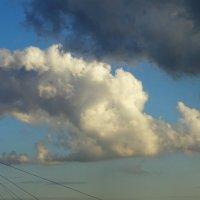 """Облако """"Птица в полете"""" :: татьяна"""