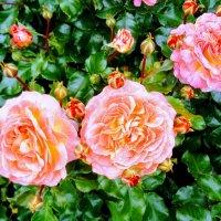 Магия цветов :: Daria Zhdanova