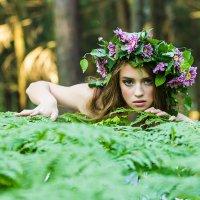 В лесу. :: Наталья Новикова (Камчатская)