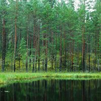 Лесное озерцо :: Николай Танаев