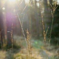 Утро в лесу :: Евгения Калугина