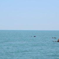 Встреча с дельфинами. :: Светлана Исаева