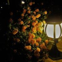 Яркий свет в ночи... :: Sergey Gordoff