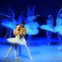 Лебединое озеро - балет :: Светлана Яковлева