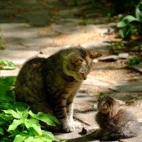 Мама, неужели собаки действительно такие страшные? :: Сергей Ткаченко