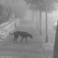 Туман ..... :: Aleks Ben Israel