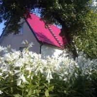 Vasaros vidurys / Sunny evening :: silvestras gaiziunas
