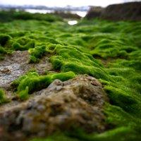 shore :: A.M. Photo