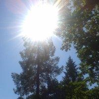 Лето :: Сапсан