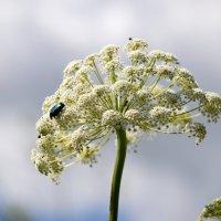 Зонтик и жуки :: Валерий Лазарев