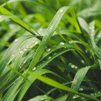 После дождя.. :: Evgenija Enot