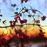 ..закат.. :: Георгий Никонов