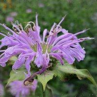 Сиреневый цветочек :: Nina Yudicheva