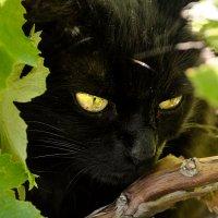Кошка в зеленом саду :: Алиса Нелеп