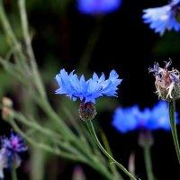 голубые :: Александр Прокудин