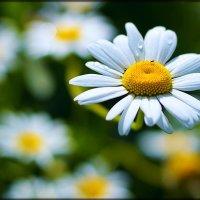 Цветы возле дома. :: Ич Ни