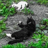 black and white:) :: Юлия Денискина