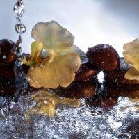 Вода и зеркало.. :: Anna Klaos