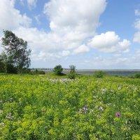 Нежной акварелью лета покрыто побережье залива :: Маргарита Батырева