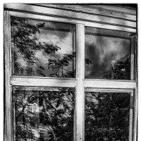 Давным давно немытое окно... :: Lidija Abeltinja