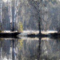 Утро на озере.... :: Юрий Цыплятников