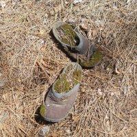 Потеряла золушка свои туфельки... :: Галина