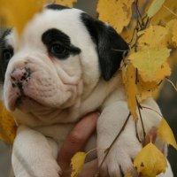 Осенняя собака) :: Натали Пам