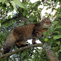 Идёт по дереву кругом. :: Нина Бурченкова.