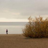 Осень на заливе :: Aнна Зарубина