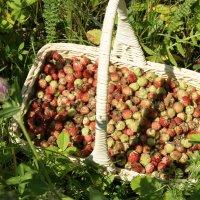 Лесная ягода :: nika555nika Ирина