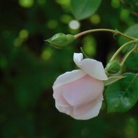 В саду Роз :: spm62 Baiakhcheva Svetlana
