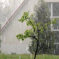 Дождь :: Роман Савоцкий