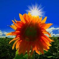 Лохматое солнышко :: Elina Bagi