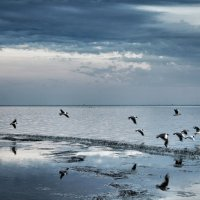 чайки :: Александр Довгий