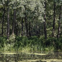 краски леса :: Геннадий Свистов